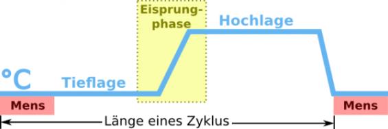 Basaltemperaturkurve-Hochlage-Tieflage-Eisprung-Basaltemperatur