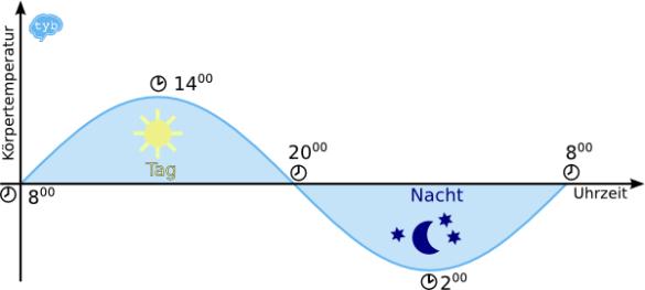 zirkadianer Rhythmus-Körpertemperatur- Tageszeit
