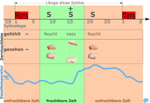 symptothermale-Methode-Kurzübersicht-Menstruationszyklus