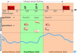 symptothermale Methode