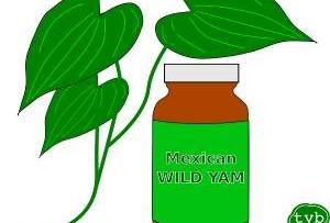 Wild Yam Verhütung statt Pille?