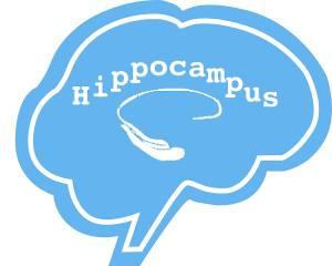 Schwangerschaftsamnesie, Hippocampus