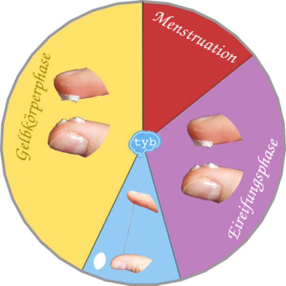 Zervixschleim-Menstruationszyklus