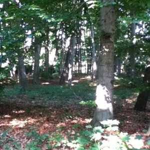 Wald-Kindergarten