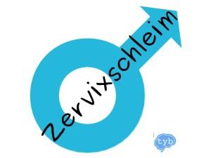 zervixschleim-maenner