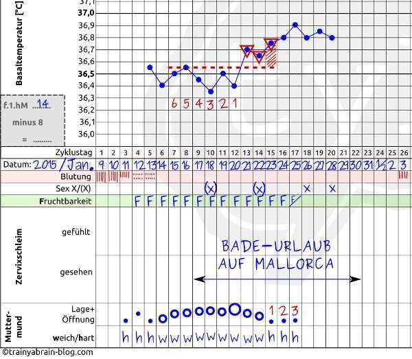 Muttermund-Zyklus-Beispiel