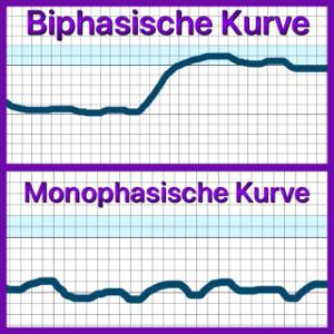 Biphasischer Zyklus
