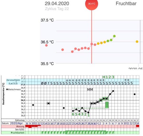 NFP und daysy Temperaturkurve zweiter Zyklus