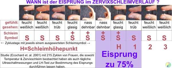 Eisprung erkennen am Zervixschleim