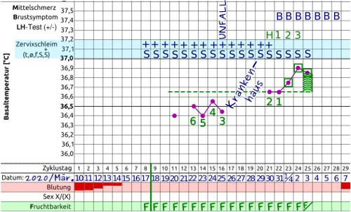 NFP Basaltemperaturkurve 2. Zyklus
