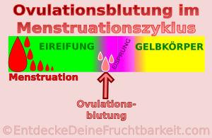 Eisprungsblutung und roter Zervixschleim