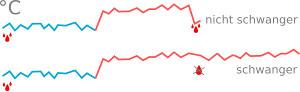 Basaltemperaturkurve als Schwangerschaftsanzeichen